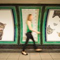 All the Ads in This London Tube Station Have Been Replaced With Cats