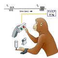 [簡] 機器學習是如何巧妙揭示大腦工作機制的