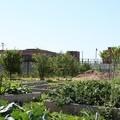 Michigan Senator Proposes a Bill to Foster Urban Farms - CityLab