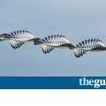 Photographs reveal flight paths of birds