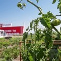 Levi's Stadium Scores Big Points for Urban Farming - 7x7 Bay Area