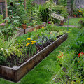 Are Backyard Gardens a Weapon Against Climate Change? - Modern Farmer