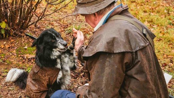 Truffel | High five voor de truffelhond in Umbrië - Italië met Dolcevia.com