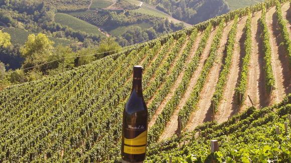 La Bruciata   De Dolcetta d´Alba wijnen van Oscar Bosio - klik hier