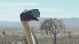Samsung: Ostrich