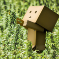 ChatBots For Pot