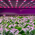 A Behind-the-Scenes Look at Europe's Huge New Vertical Farm
