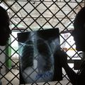 Stanford trained AI to diagnose pneumonia better than a radiologist in just two months