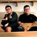 沒有甄嬛和如懿,只有貓咪的黃阿瑪後宮生活