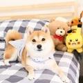 稀少的「犬系」YouTuber:柴犬 Nana 與阿楞的 YouTube 之路